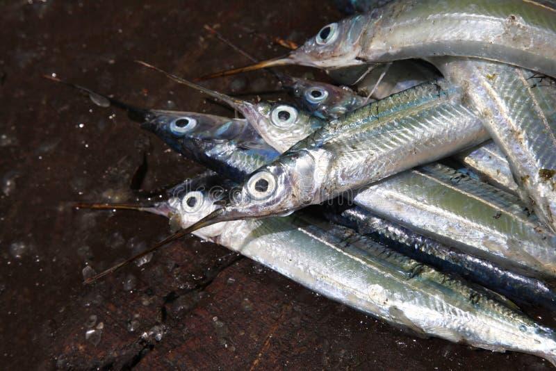 Staplad fisk på marknaden för stenstadfisk arkivfoto