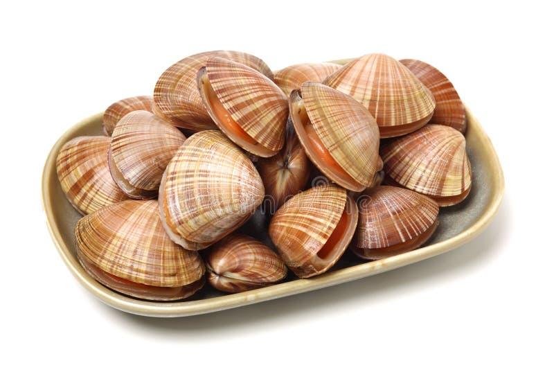 Staplade nya r? musslor arkivfoton