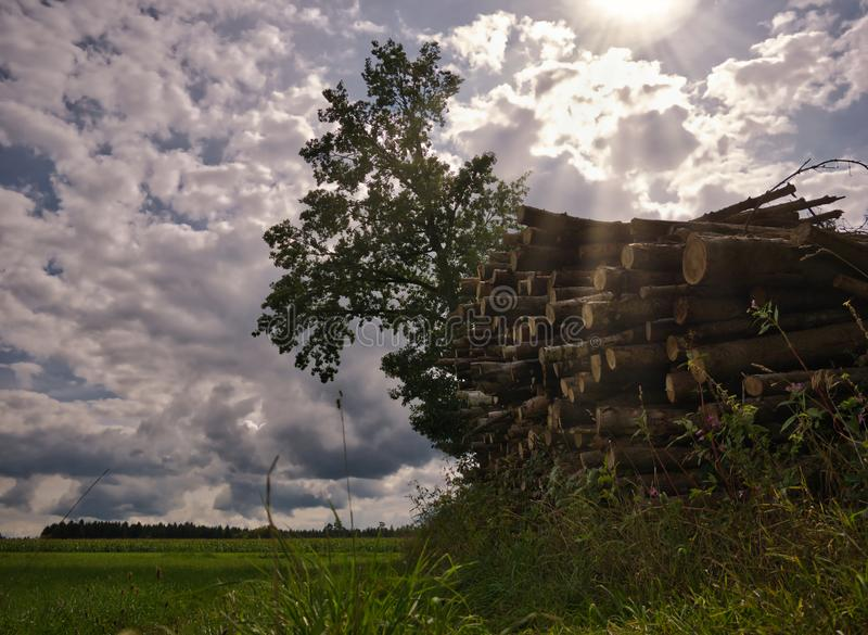 Staplade träd på en äng med solstrålar royaltyfri foto