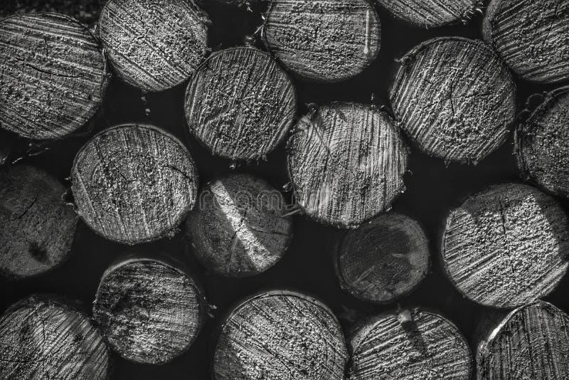 Staplade tr?journaler som bakgrund, h?g av tr?journaler Journaler av tr?textur Svartvit bild fotografering för bildbyråer