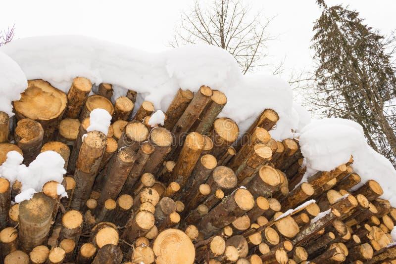 Staplat trä som täckas med snö, fjällängar Österrike i Salzburg royaltyfria bilder