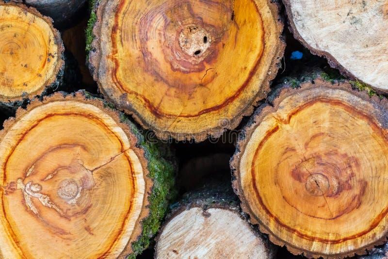 Staplat trä täckt med snö Bakgrund En skogshög av torra brandskogar på vintern Stack av ved med snö Vinterbrand royaltyfri foto