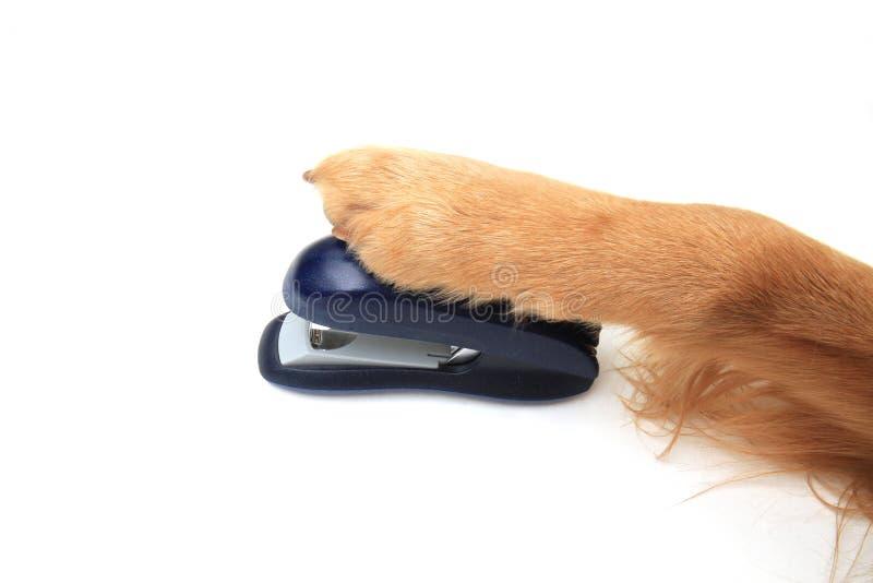 stapler σκυλιών χρησιμοποίηση στοκ φωτογραφίες