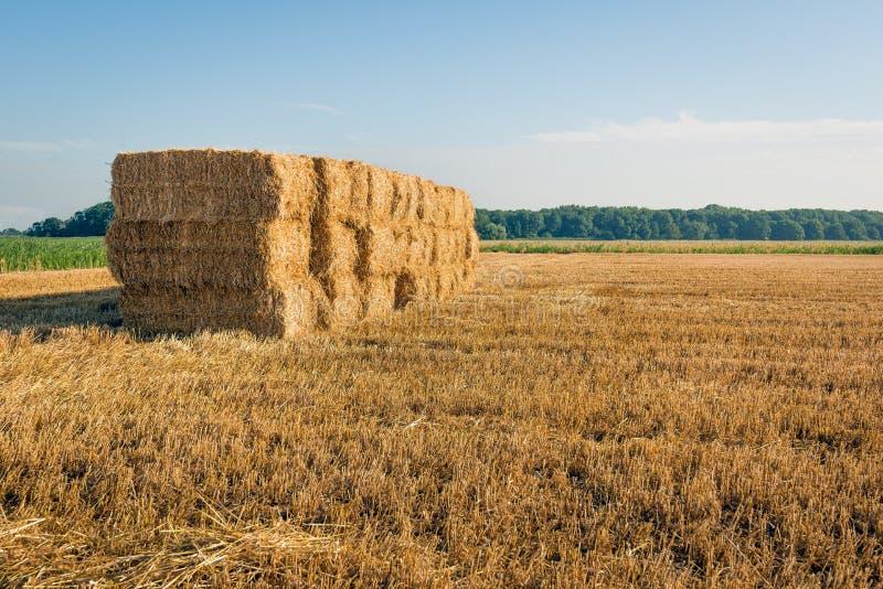 Staplungssätze Stroh, nachdem der Weizen geerntet worden ist stockfotos