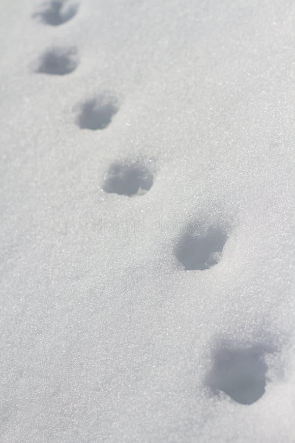 Stappen in sneeuw stock afbeelding