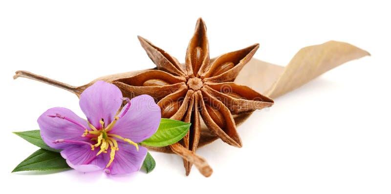 Star anise. stock photos