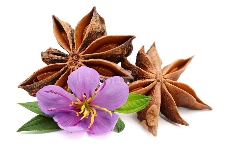 Heap of star anise on white. stock photography