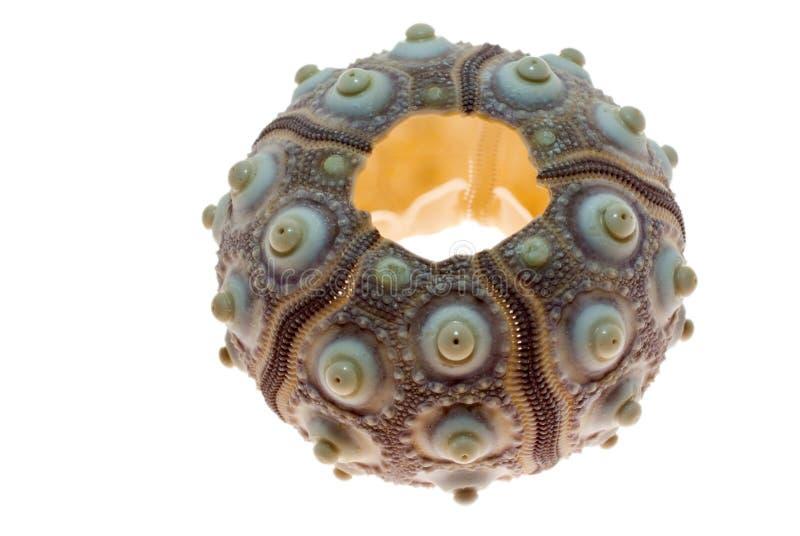 Star-fish lizenzfreie stockfotos