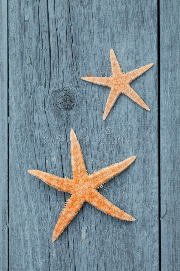 Free Star Fish Royalty Free Stock Images - 21278349