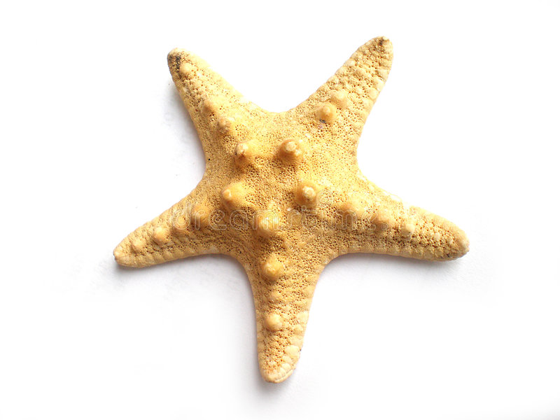 Star fish stock image
