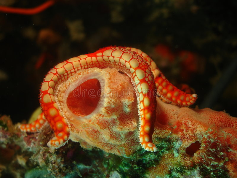 Star Fish hanging on royalty free stock images