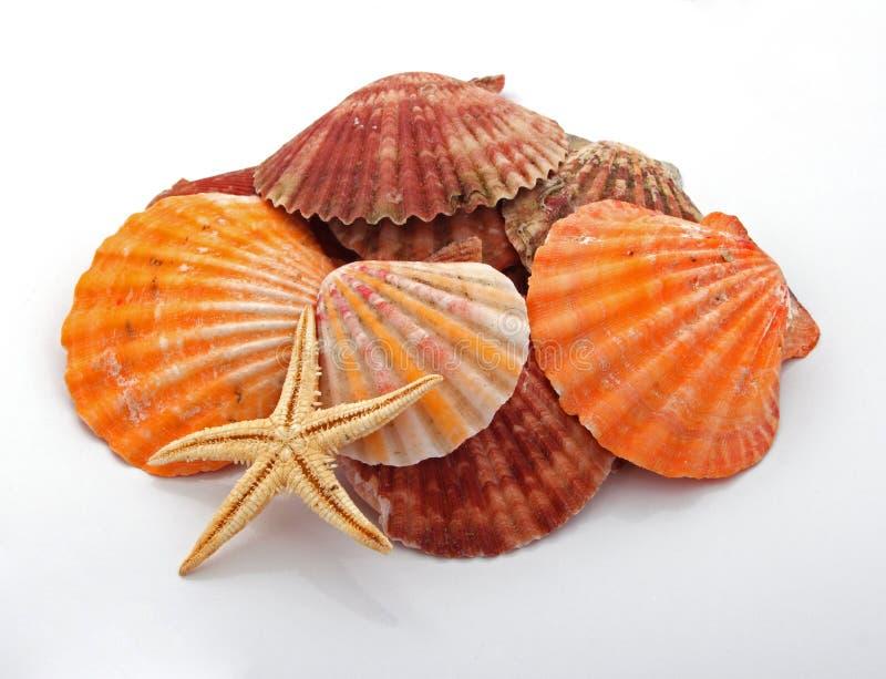 Star fish and sea shells stock photo