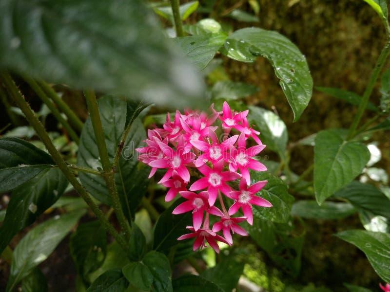 Star Flower stock photos
