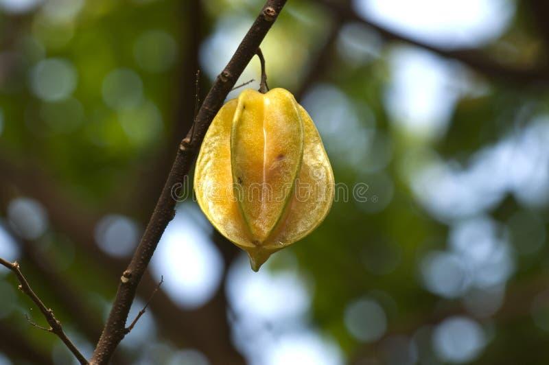 Download Star fruit stock image. Image of averrhoa, asian, exotic - 23886407