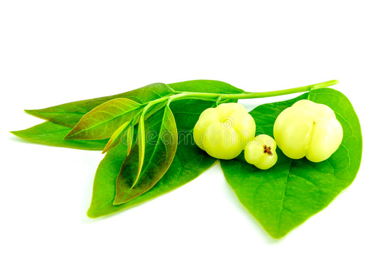 Download Star Gooseberry Or Phyllanthus Acidus Stock Photo - Image: 32441884