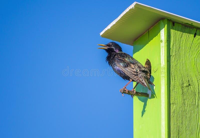 Star im Vogelhaus lizenzfreie stockfotos