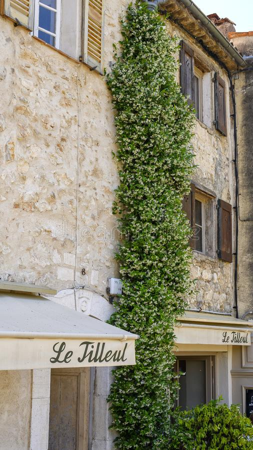 Free Star Jasmine Climbing Three Stories In Saint Paul De Vence, Provence, France Royalty Free Stock Images - 159367069