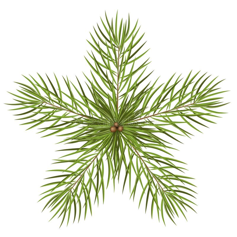 Fir Tree Branches - Star Shaped Abstract Vector Illustration vector illustration