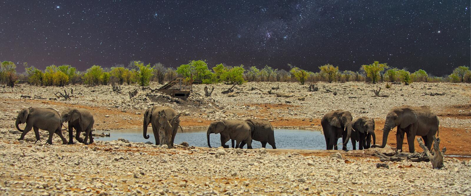 Star studded night with elephants at a waterhole, in Etosha royalty free stock images