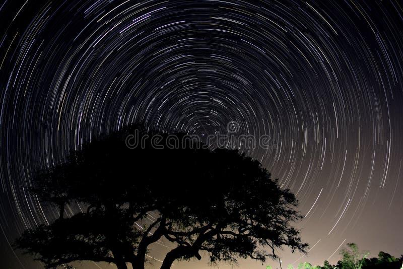 Long exposure star trail of a live oak tree in North Carolina. stock photo