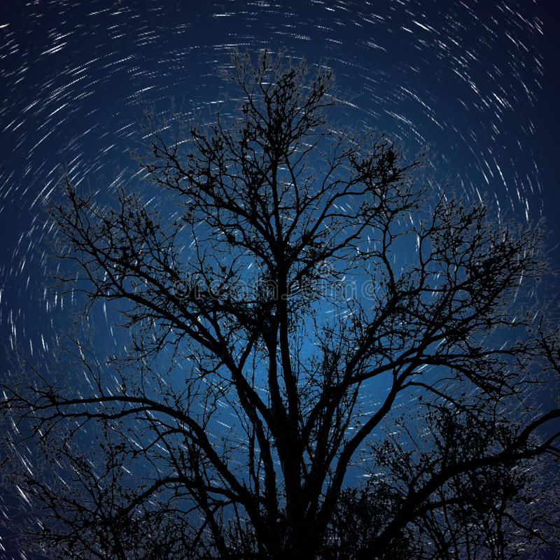 Free Star Trail With Silhouetted Tree Stock Image - 89541101