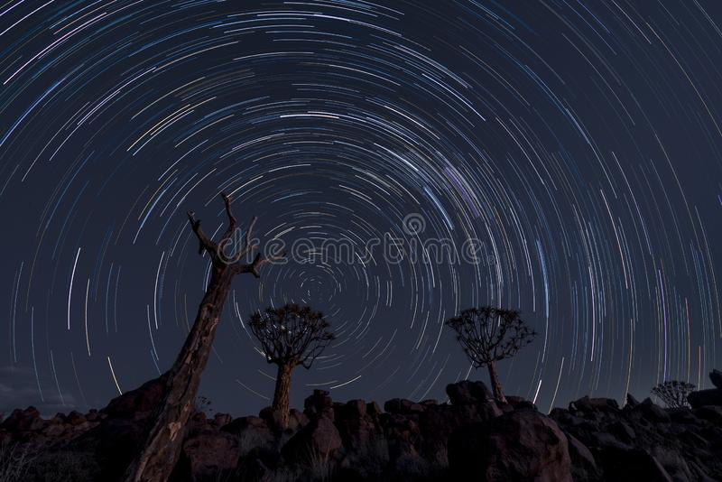 Star trails circle over quiver trees royalty free stock image