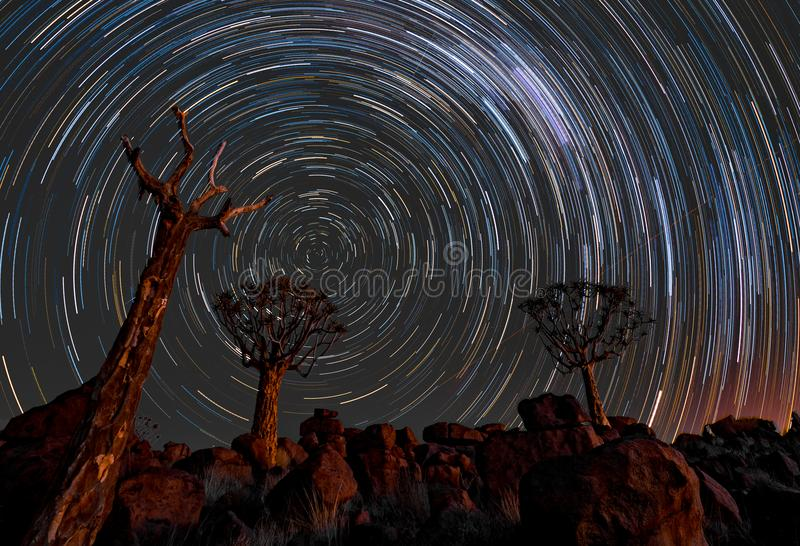Star trails circle over quivertrees royalty free stock photos