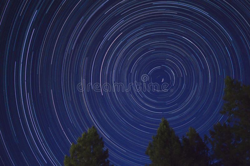 Star Trails with trees royalty free stock photography