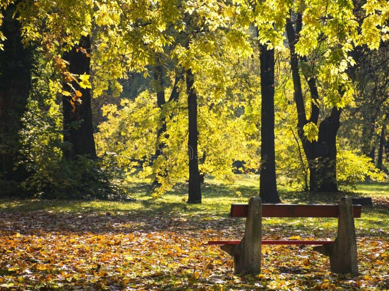 Stara ławka w jesiennym parku obrazy stock