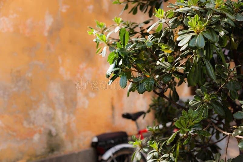 Stara ściana i zielony krzak zdjęcia stock