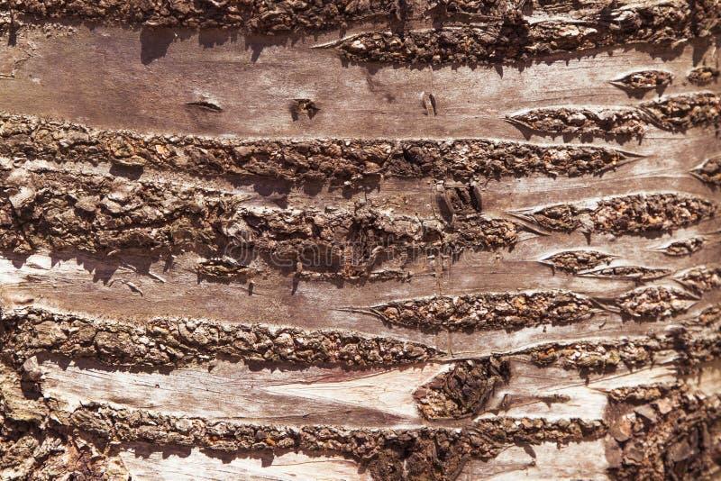 Stara Bogata Drewniana tekstura Czereśniowy tło obraz stock