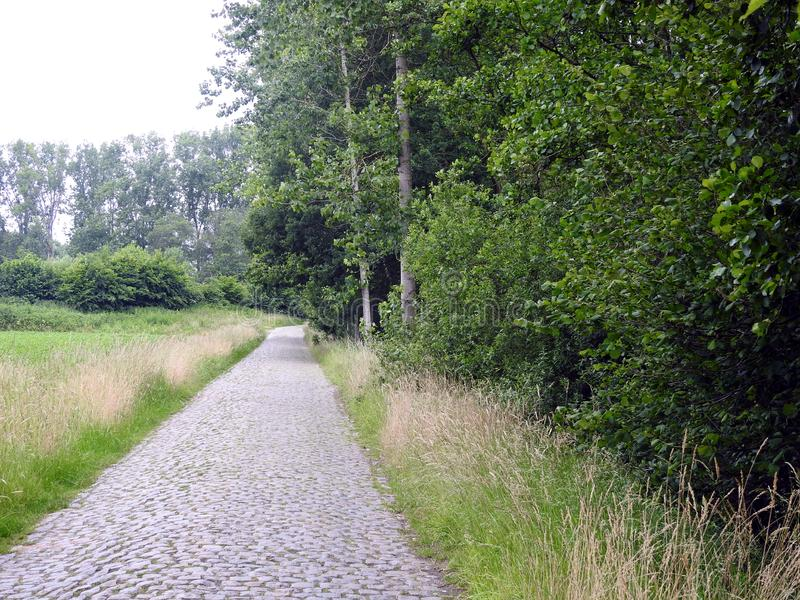 Stara brukowiec droga w lesie obrazy stock