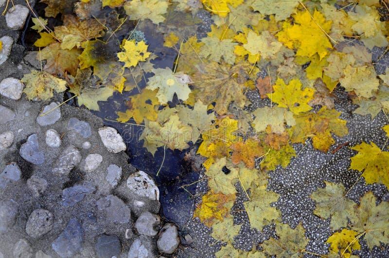 Stara brukowiec ulica z jesień koloru żółtego liśćmi i błotnistą kałużą life-soft/ciężki - tło jesieni spadku wilgotny pojęcie - zdjęcia royalty free