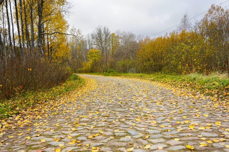 Stara brukująca wyginająca się droga, zakrywająca z żółtymi liśćmi w spadku zdjęcia royalty free