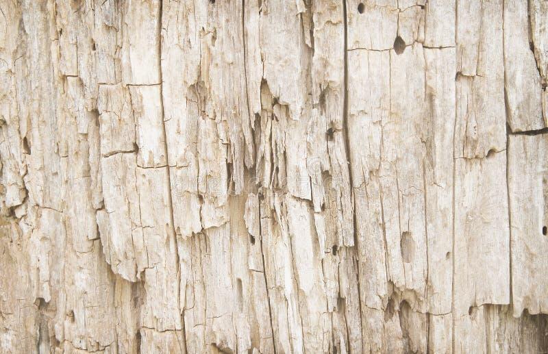 Stara drewniana skóra z gnijącymi wzorami, natury ścienny tło fotografia stock