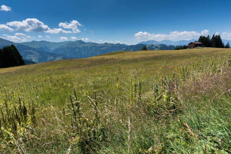 Stara drewniana stajnia w wildflower łące w wśrodzie Szwajcarski góra krajobraz obrazy royalty free