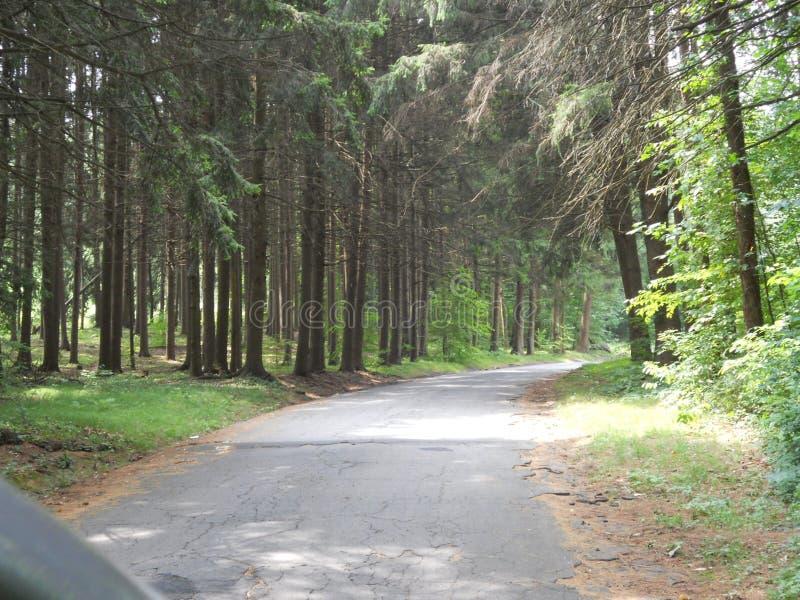 Stara droga przez drewien Connecticut zdjęcie stock