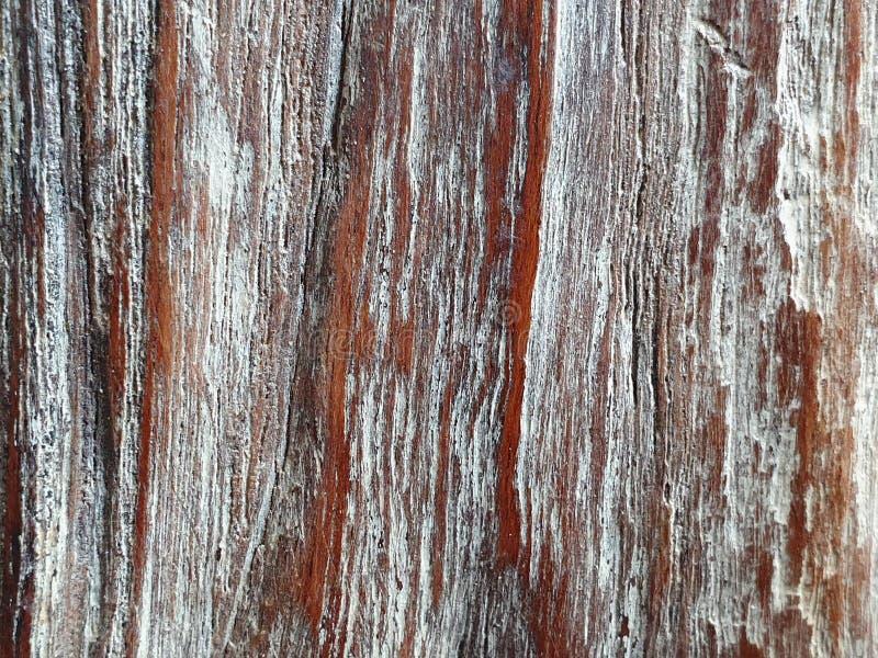 Stara drzewnego bagażnika szczegółu tekstura, naturalny tło fotografia stock
