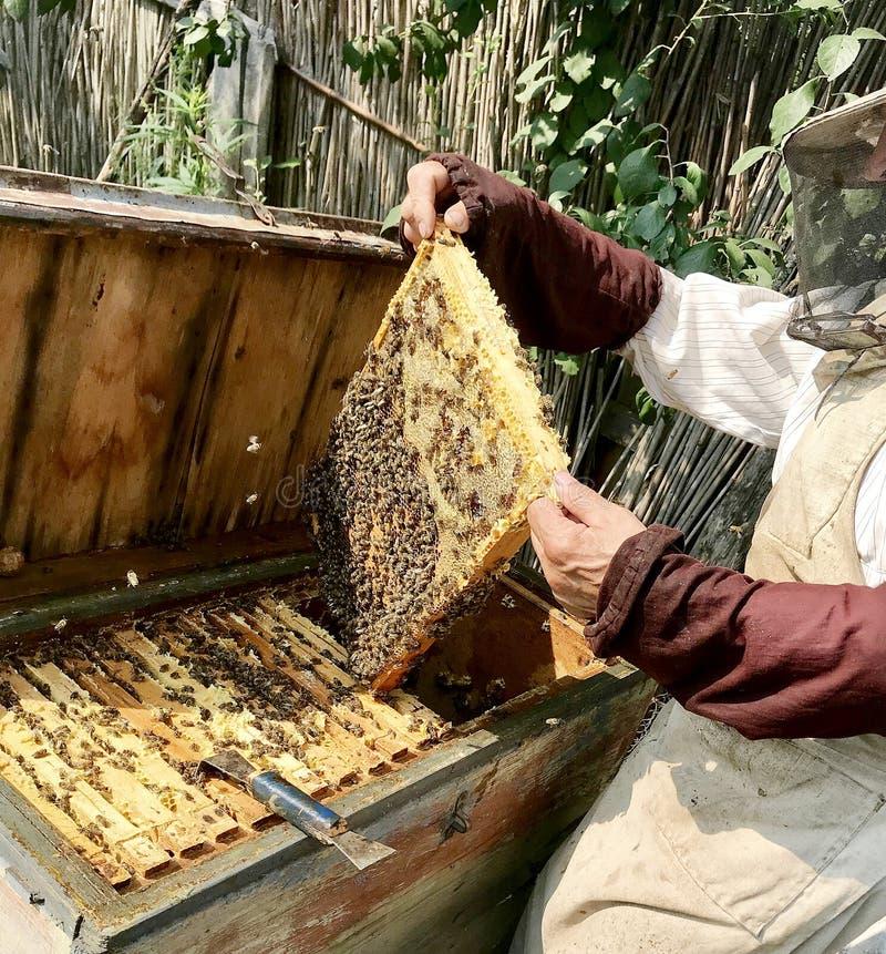 Stara dziadek pszczelarka pracuje na jego swój wiejskiej pasiece fotografia royalty free