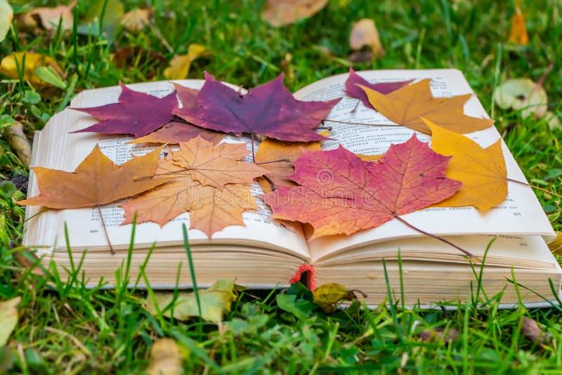 Stara gęsta rozpieczętowana książka z białą płótno pokrywą i grupą suchego jesień liści herbarium klonowa czerwień i kolor żółty zdjęcia stock