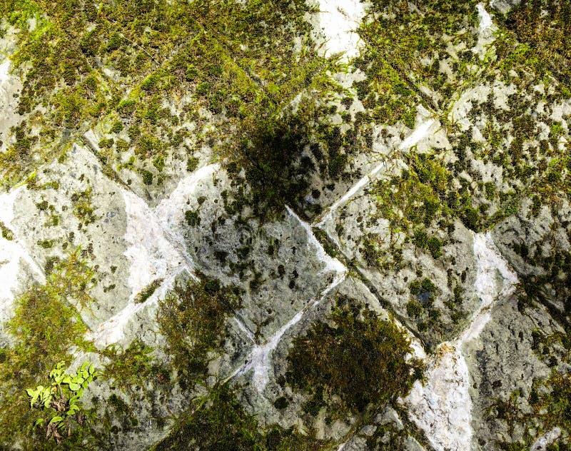 Stara kamienna ściana zakrywająca z mech obraz royalty free