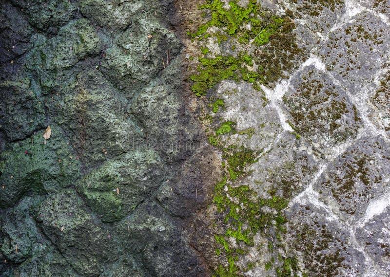Stara kamienna ściana zakrywająca z mech przy słonecznym dniem obraz stock