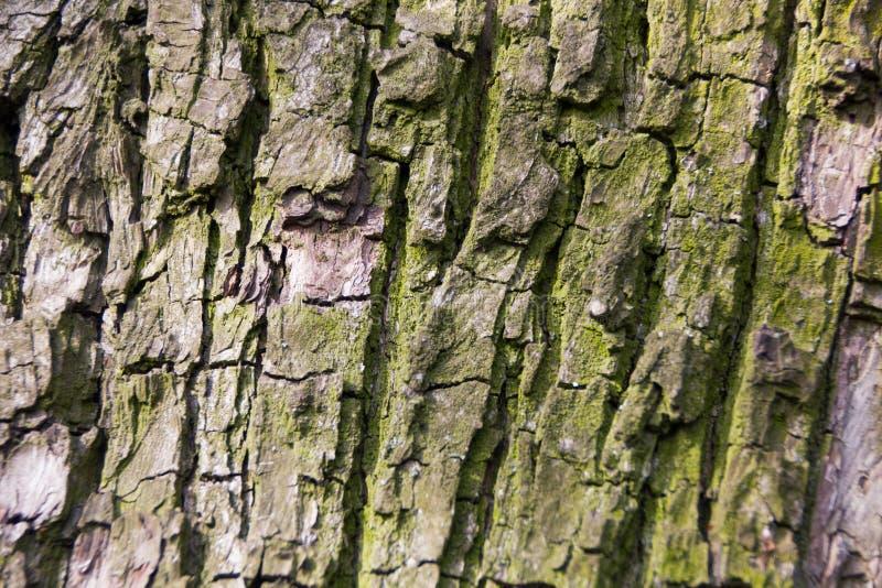 Stara mechata drzewna barkentyna fotografia stock