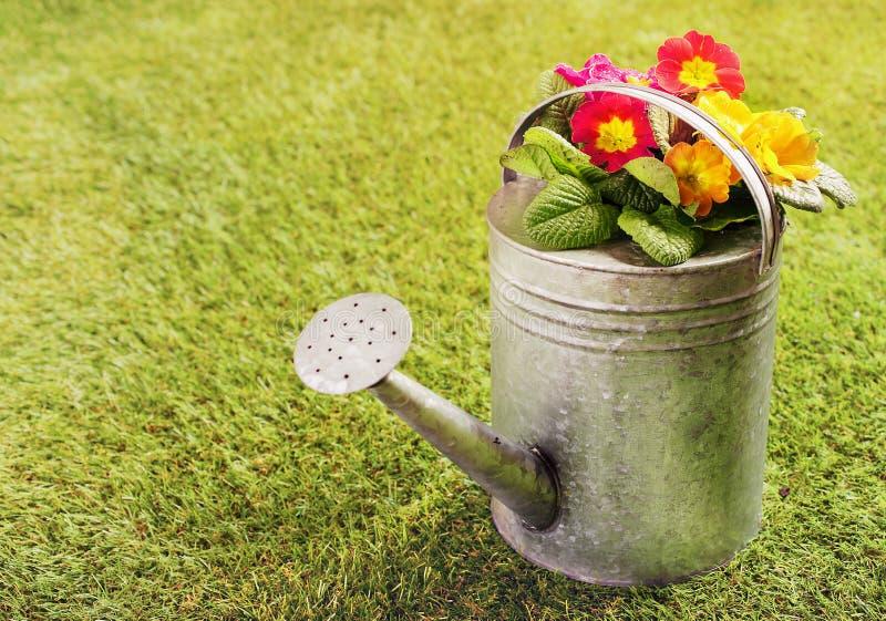 Stara metalu podlewania puszka na trawie obrazy royalty free