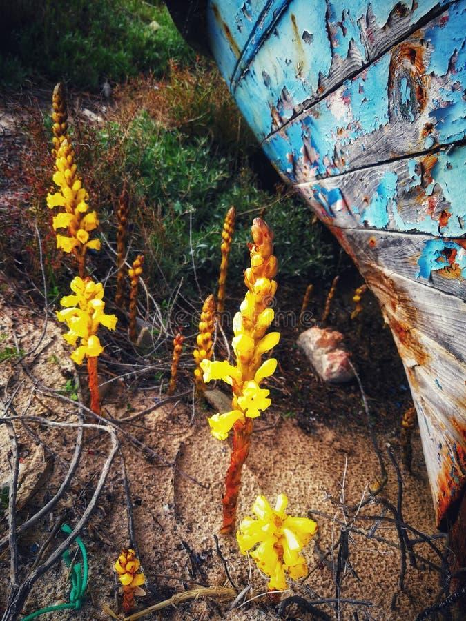 Stara mody łódź zdjęcia stock
