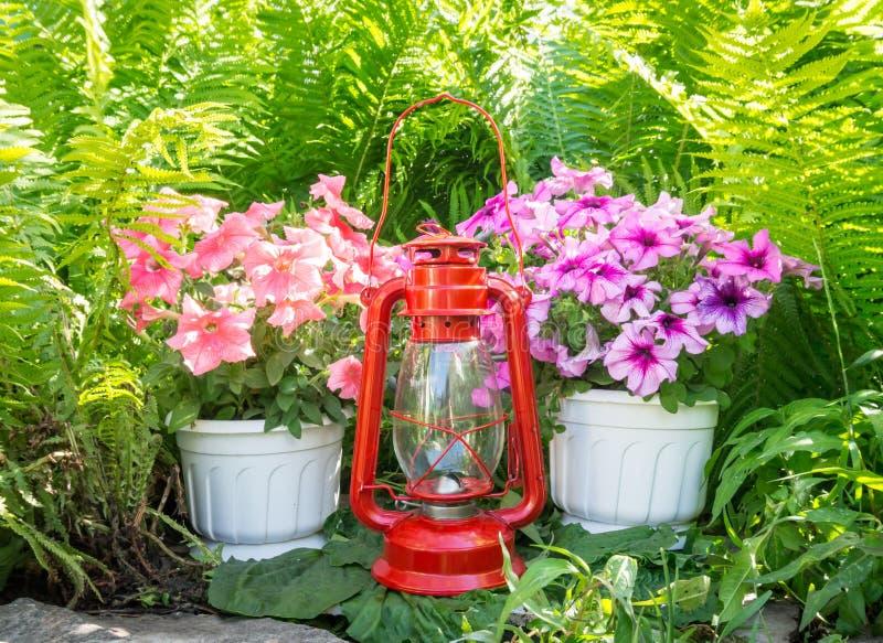 Stara nafty lampa, petunie w ogródzie i fotografia royalty free