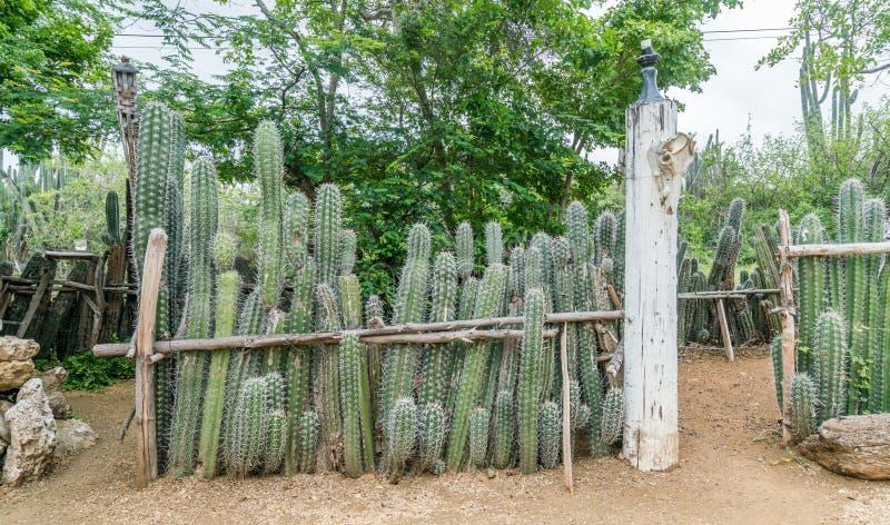 Stara Niewolnicza buda - kaktusa Curacao płotowi widoki zdjęcia stock