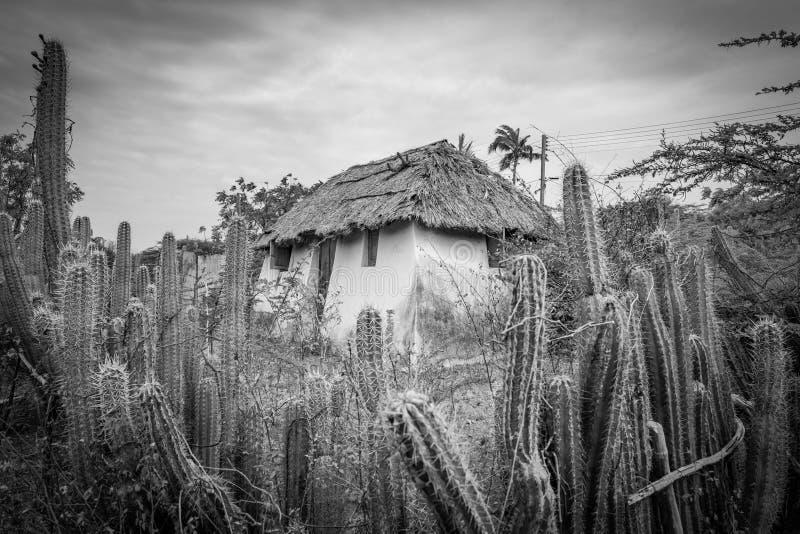 Stara Niewolnicza buda - kaktusa Curacao płotowi widoki zdjęcie royalty free