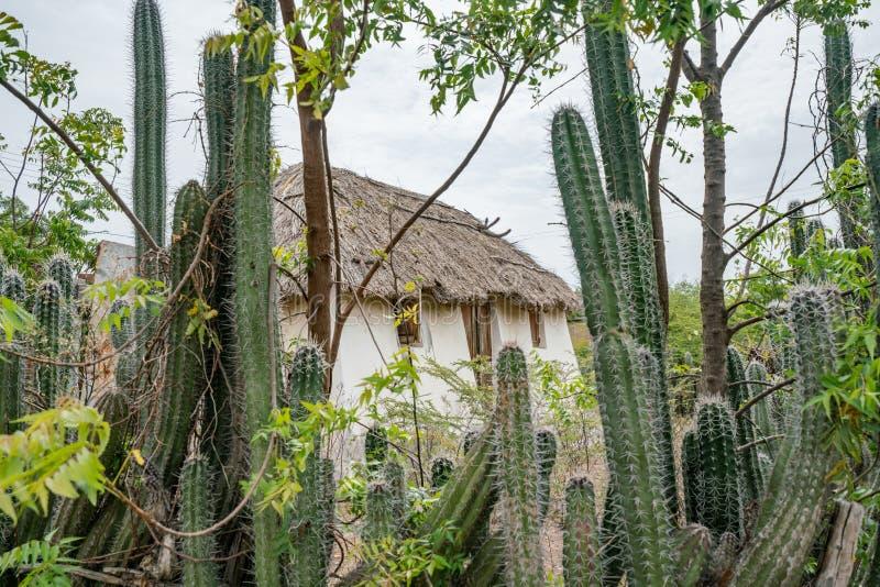 Stara Niewolnicza buda - kaktusa Curacao płotowi widoki zdjęcia royalty free