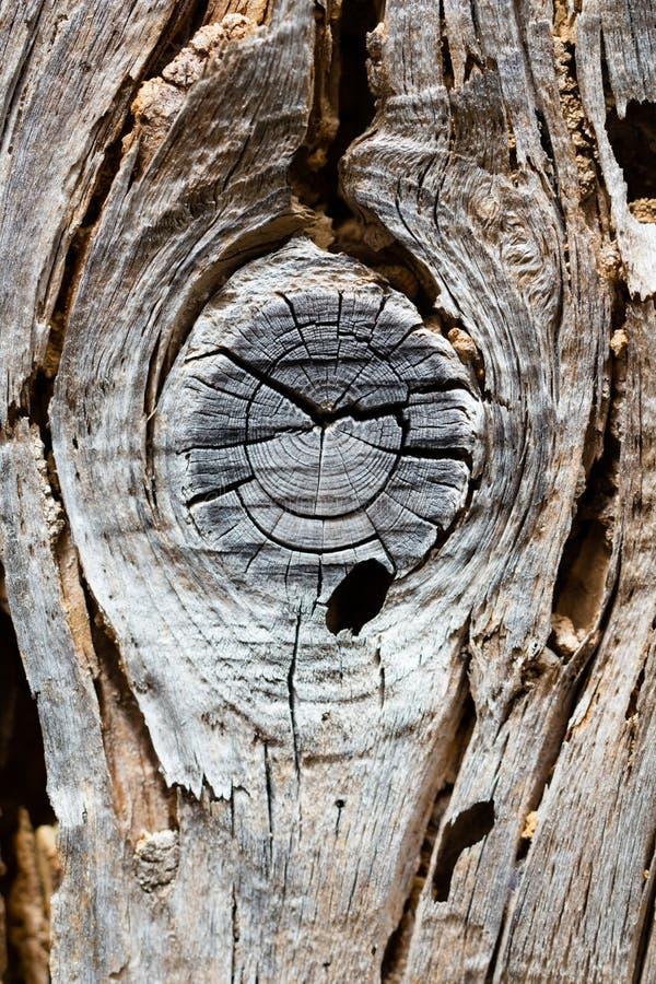 Stara przegniła sucha drewno powierzchnia obraz stock